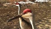 cranes_april