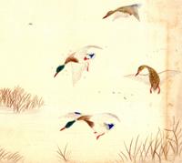 Aldo Leopold Drawing & Writing