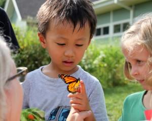 releasing_monarchs
